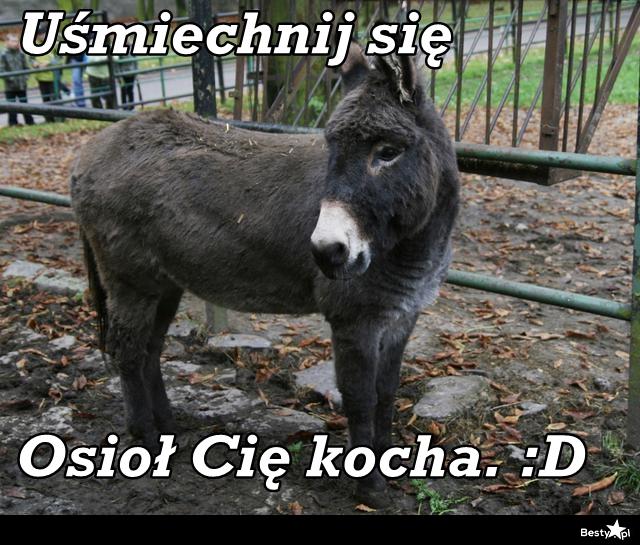 http://img.besty.pl/images/344/96/3449609.jpg