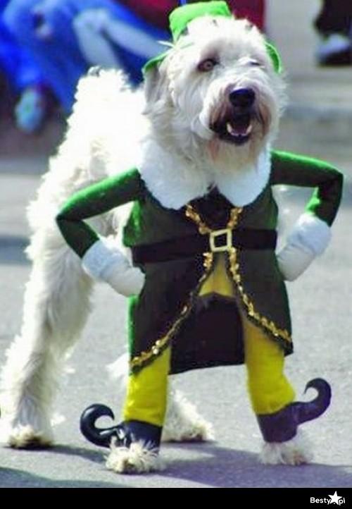 Leprechaun Dog Video