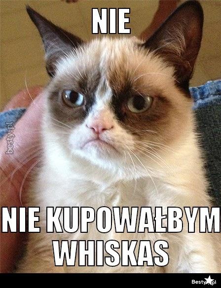 Bestypl Kot Z Fochem Cz 1