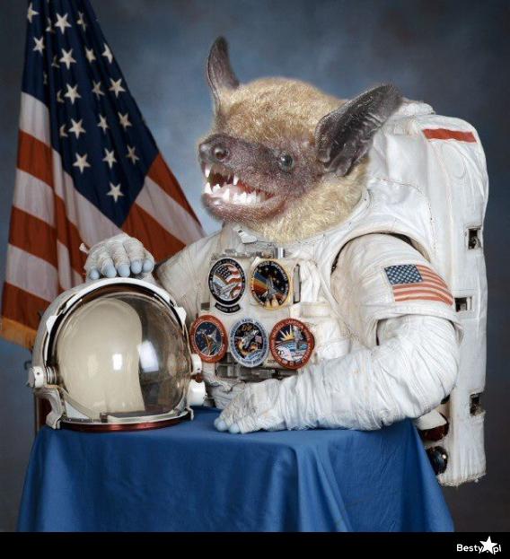 space shuttle horses arse - photo #25