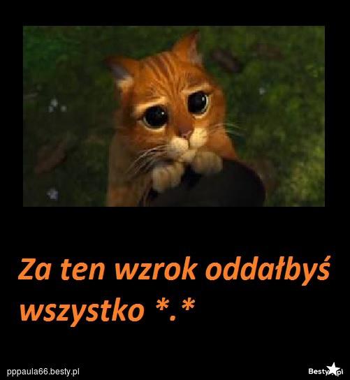 Bestypl Kot Ze Shreka