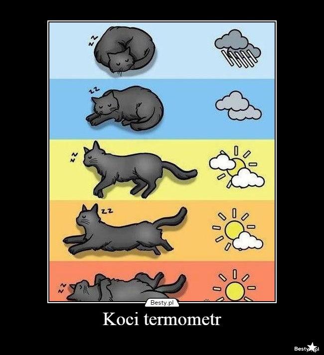 картинка определение погоды по коту помощью этой обводки