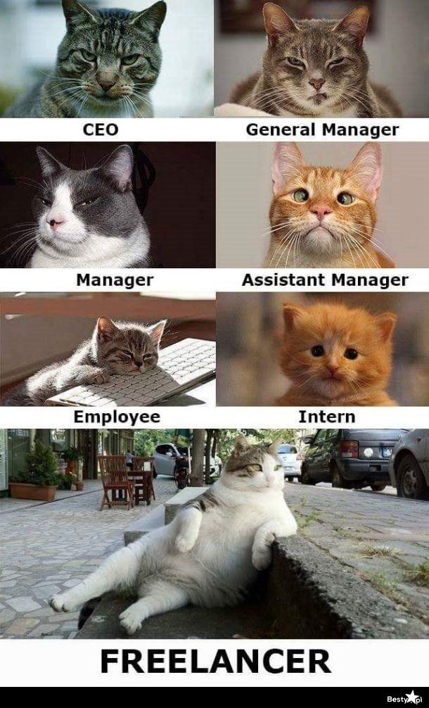 Znalezione obrazy dla zapytania freelance mem