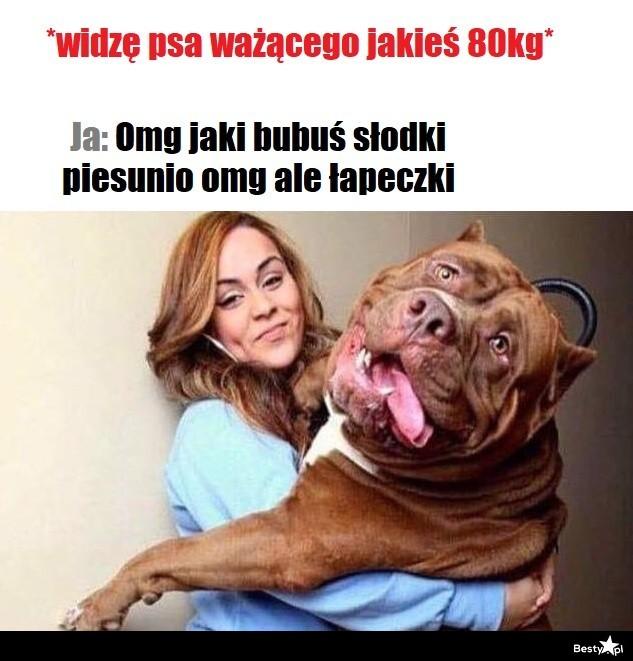 Kiedy widzę psa ważącego jakiegoś 80kg