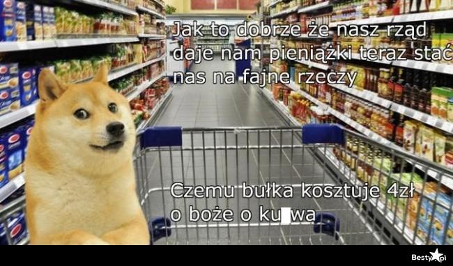 Pieseł w sklepie