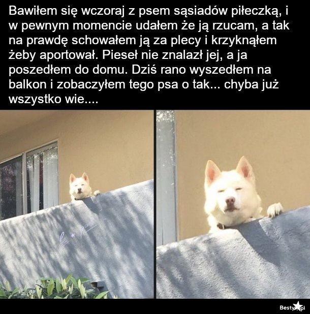 Pies sąsiadów