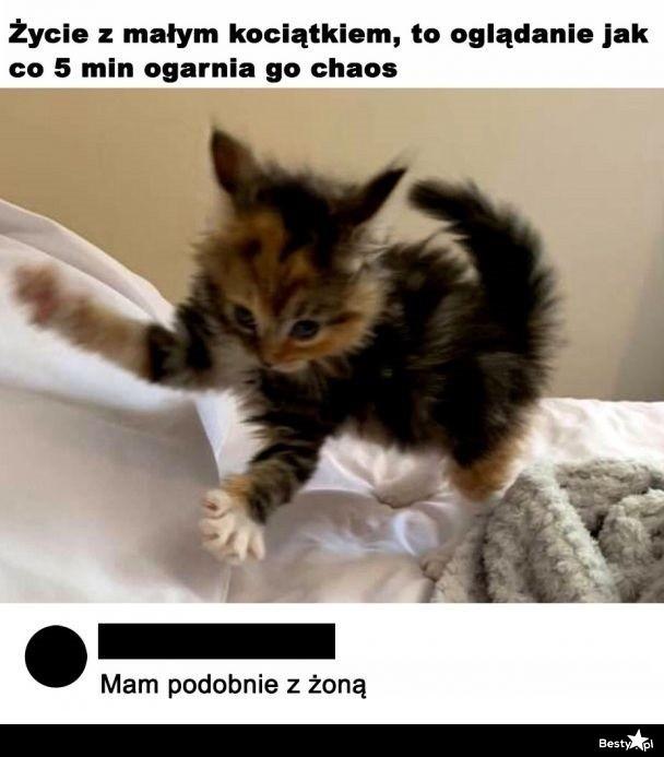 Życie z małym kociątkiem