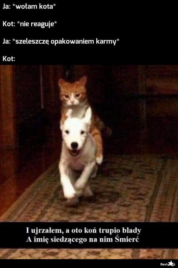 Koty takie są :D