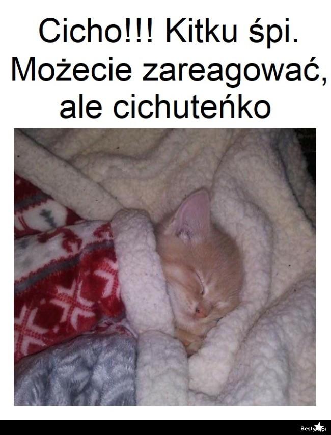 Kitku śpi