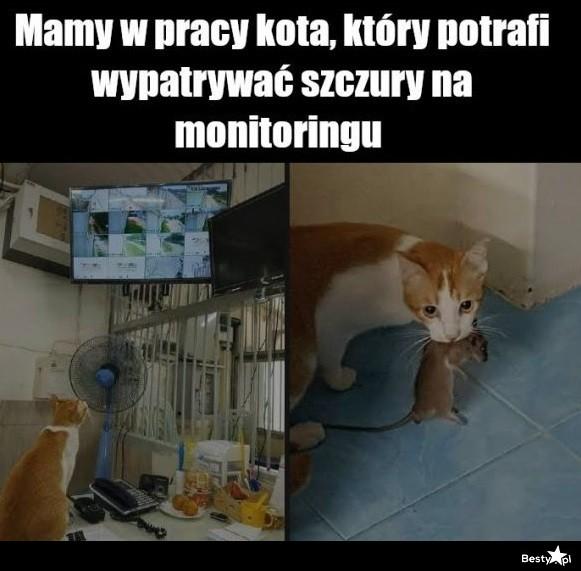 Pożyteczny kot
