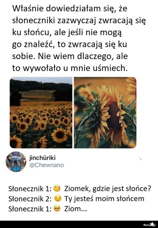 Mem o słonecznikach