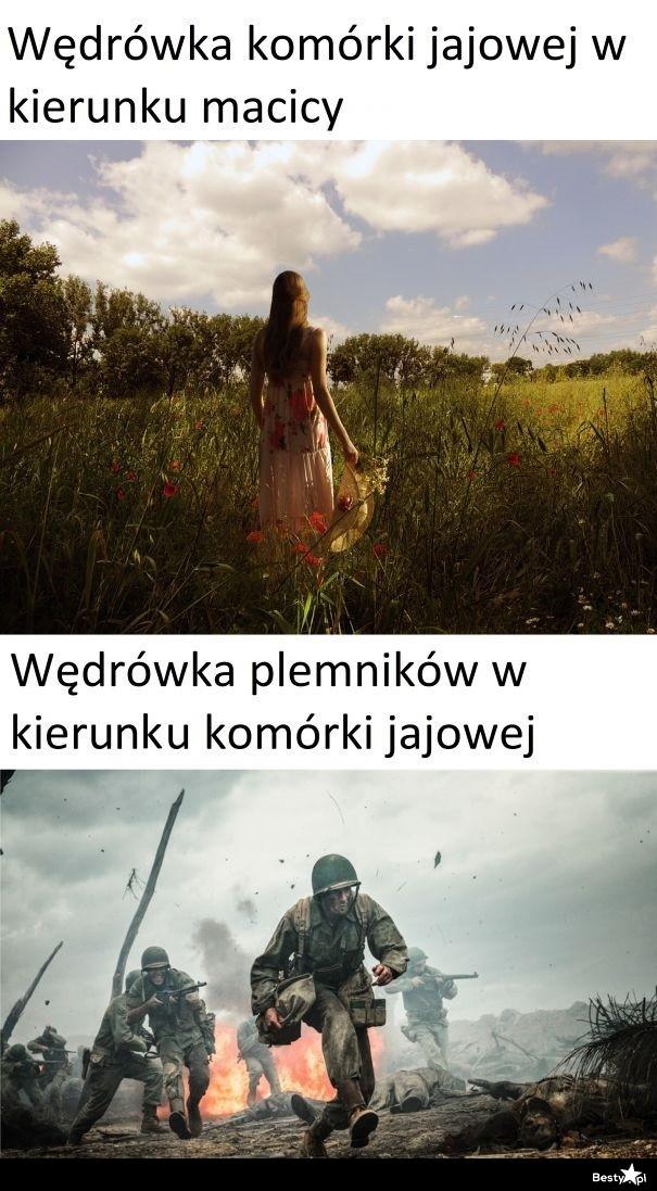 Biologia na memie
