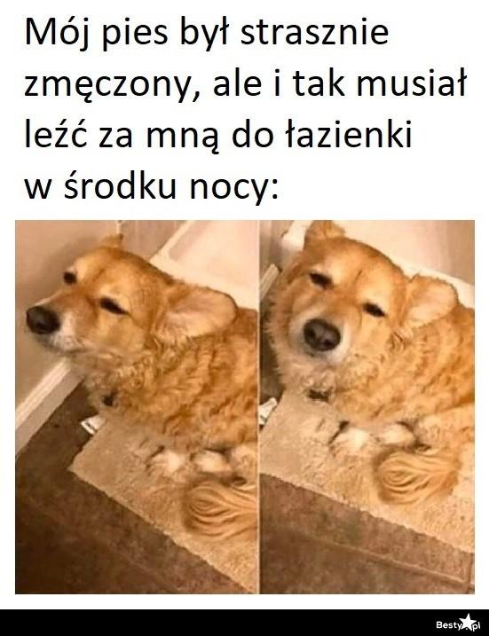 Psie obowiązki