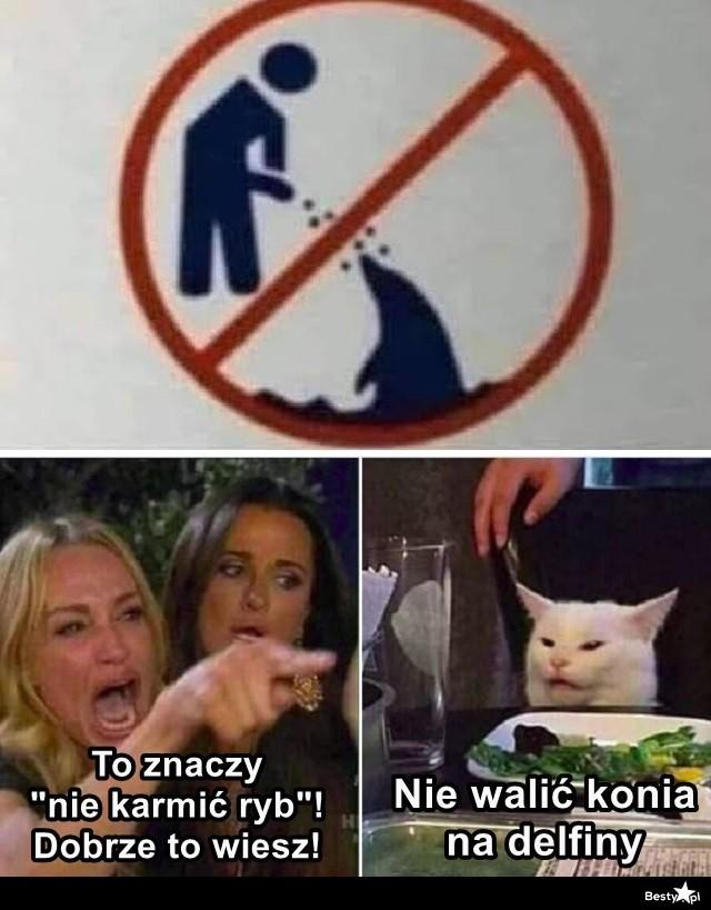 Kot wie swoje
