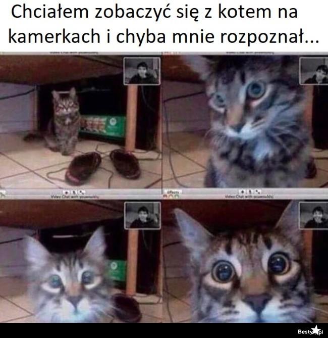 Spotkanie na kamerkach z kotem