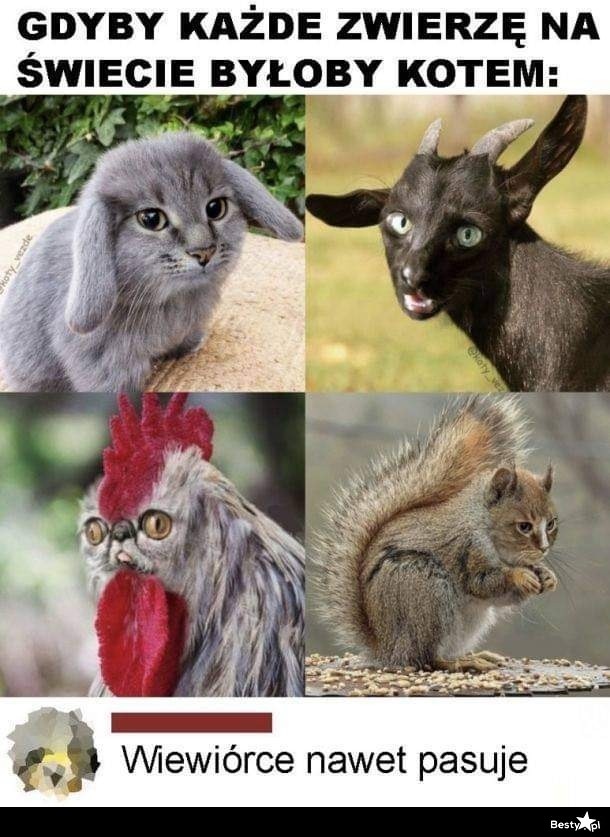 Gdyby każde zwierzę było kotem