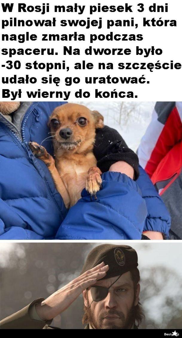 Psia wierność